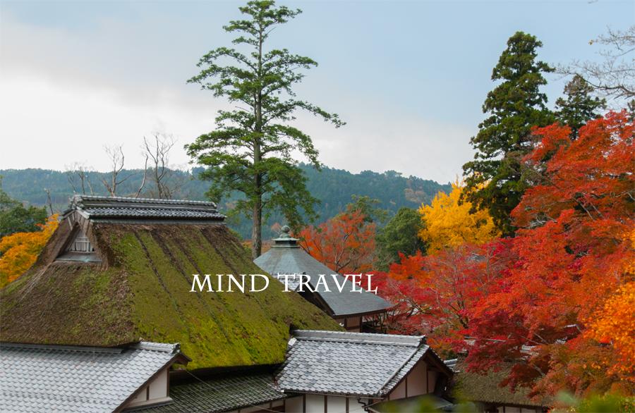 永源寺 含空院 紅葉