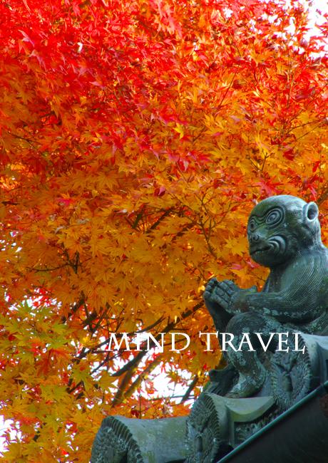 西教寺 猿 紅葉