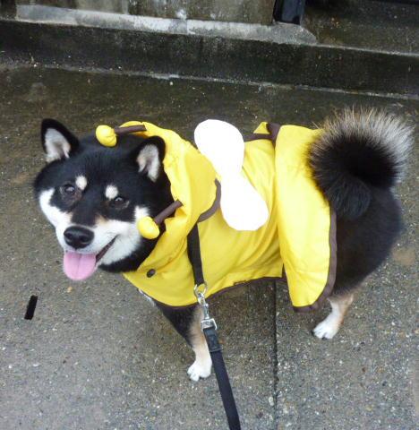 ハチさんでお散歩