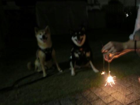 お庭花火 三