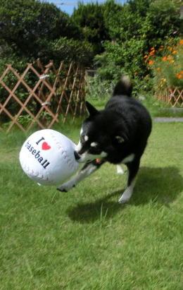 ボール クロ1