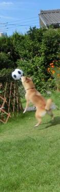 ボール コロ3