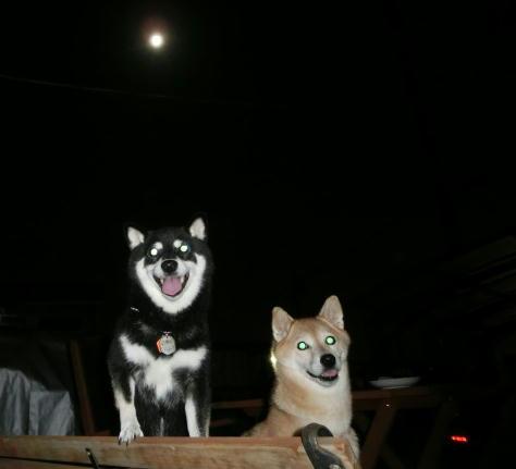 お庭でお月見