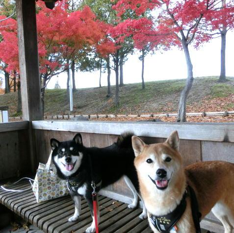 落合公園 紅葉