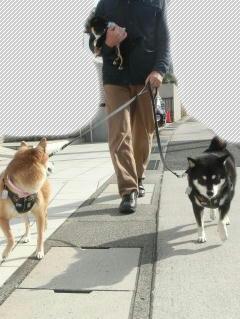 3 柴散歩