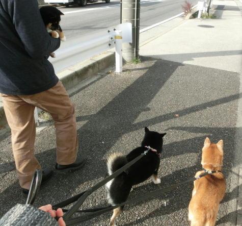 初 3柴散歩