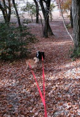 落ち葉の坂道