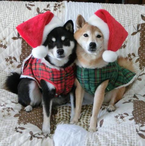 クリスマス コロクロ