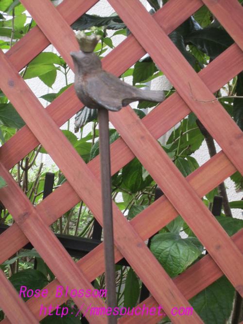 birddou20100827.jpg