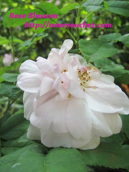 dorumoa201105201.jpg