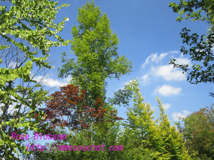 garden201008301.jpg