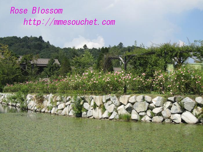 garden201008302.jpg