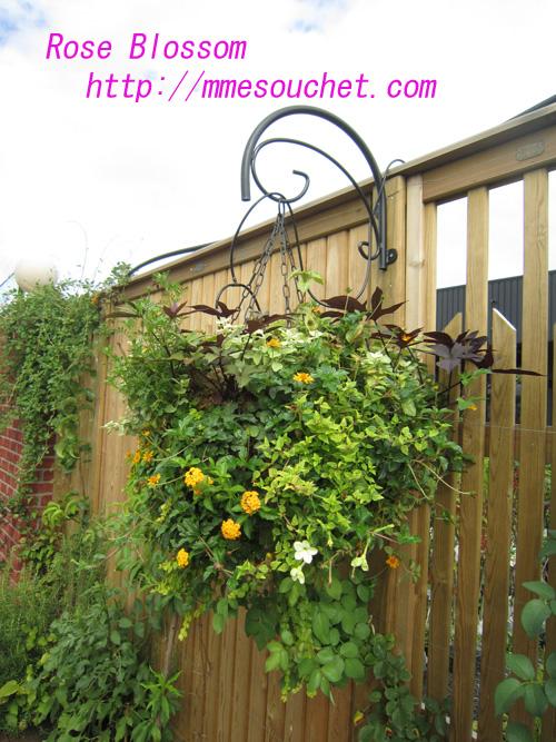 hanging201008092.jpg