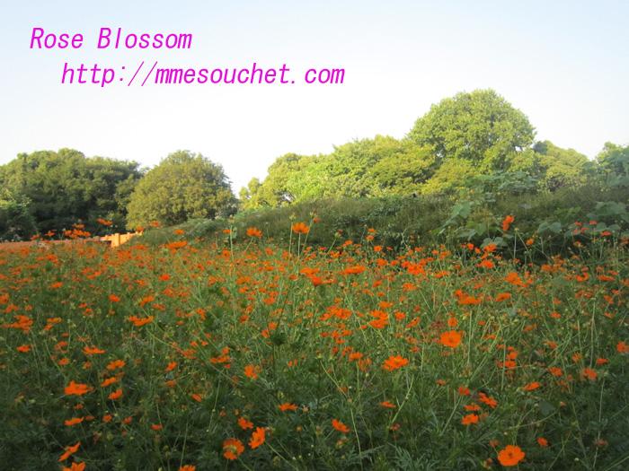 kibana20100822.jpg