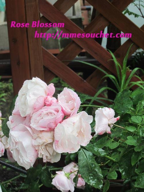 r201105241.jpg