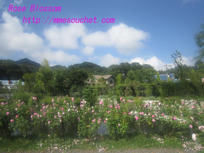 rose201008183.jpg