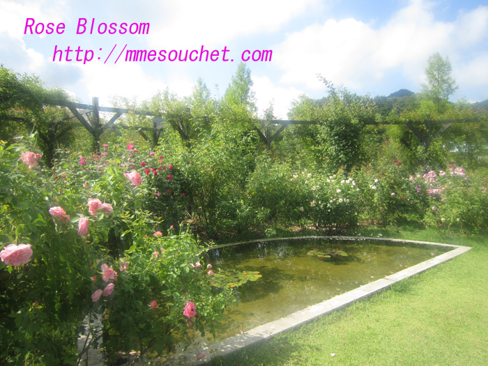 rose201008186.jpg