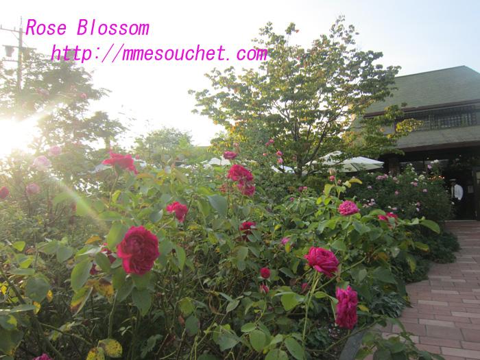 rose20100829.jpg