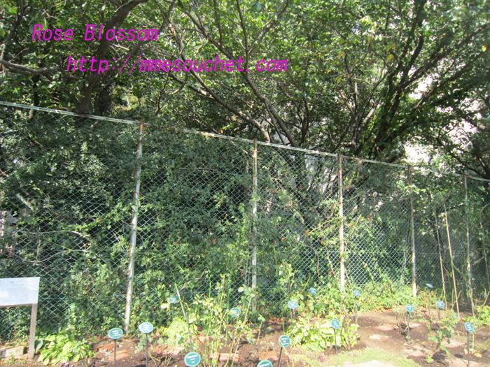 rosegarden20100906.jpg