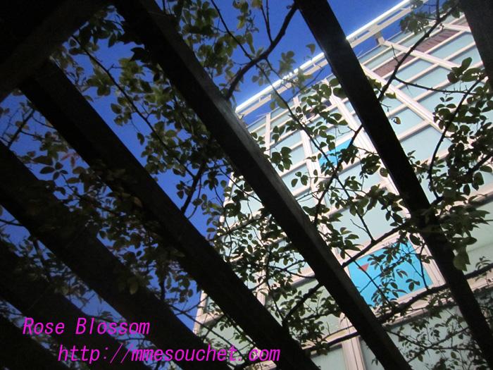 rosegarden20100911.jpg