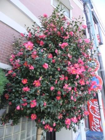 2011_01090073.jpg