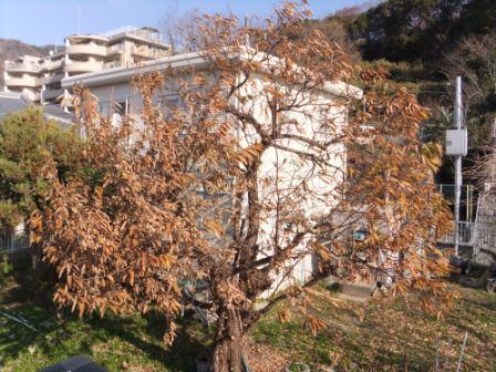 2012_01050003.jpg