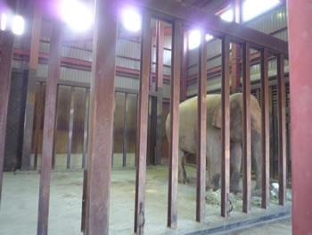 王子動物園 ゾウ