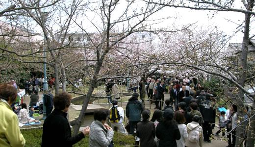 岡本南公園観桜会2012-1