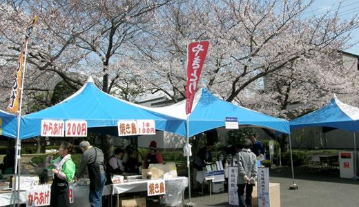 白鶴酒蔵開放・六甲アイランドチューリップ祭・岡本南公園観桜会-1