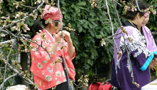 岡本南公園観桜会2012-4