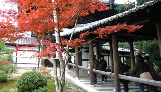 京都の秋2013・東福寺(2)-2