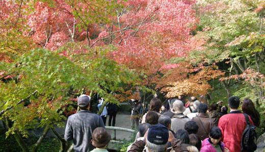 京都の秋2013・東福寺(3)-3