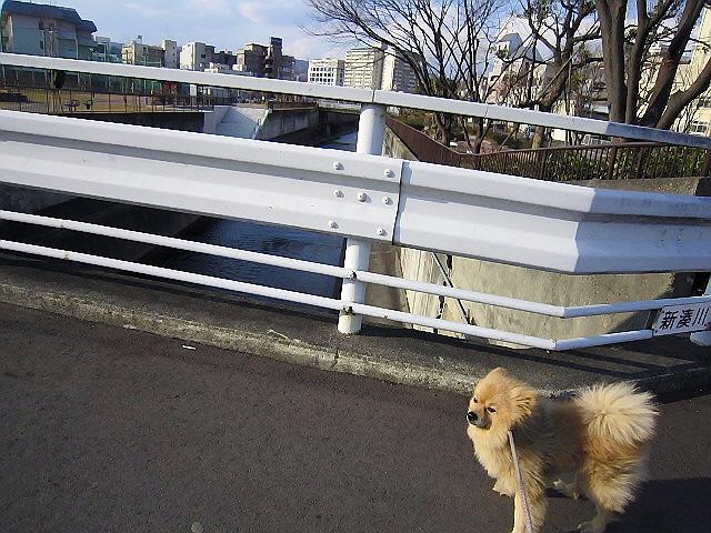 新しくできた「新港川公園」に行ってきました♪