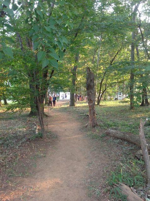 雑木林 北本 3