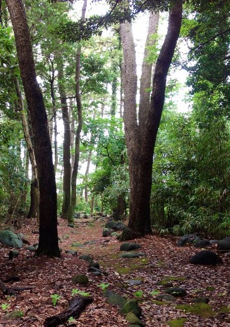 松林の道1