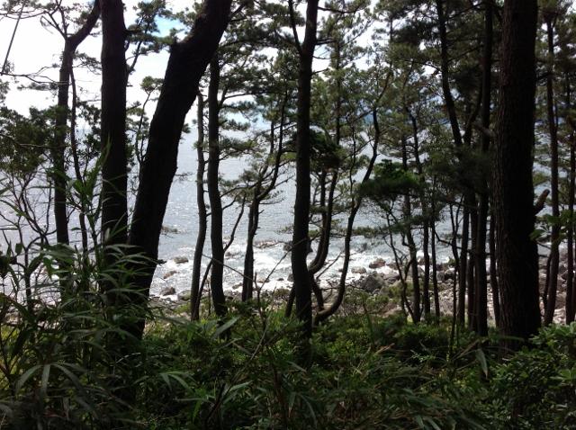 松林の道3