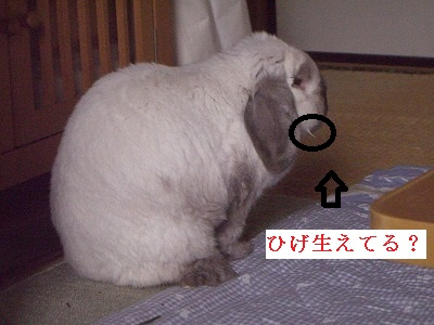 CIMG7798.jpg
