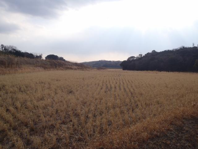 13田んぼの風景