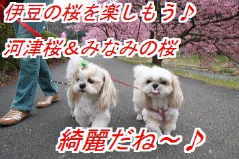 kawadu_20130126033833.jpg
