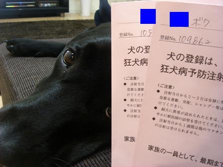 11 5 27狂犬病