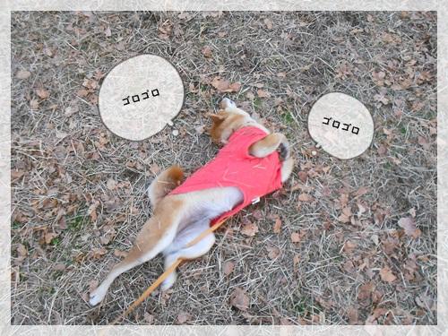 20120108リッキー6