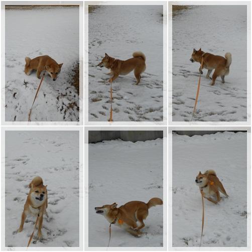 雪みかん2