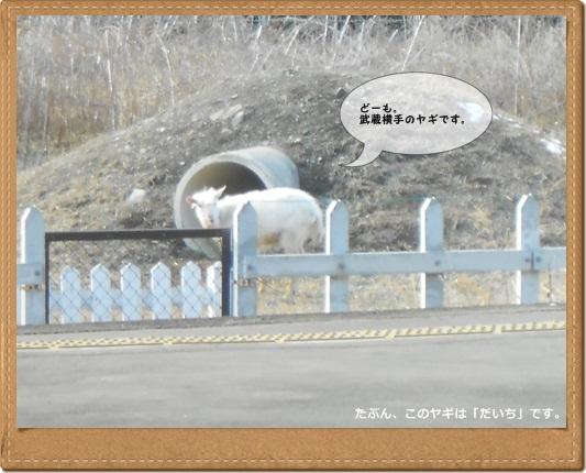 201201こいけ蕎麦2