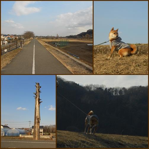 201202多摩川・羽村