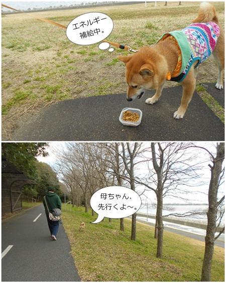 201202東京ゲートブリッジc