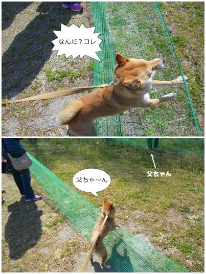 201204HFJ@みかん