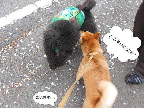 20120417小太郎3