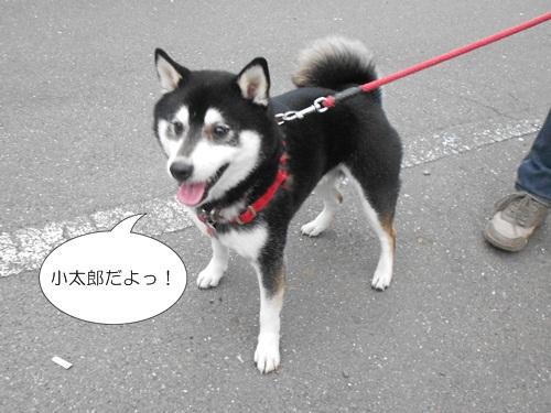 20120417小太郎5