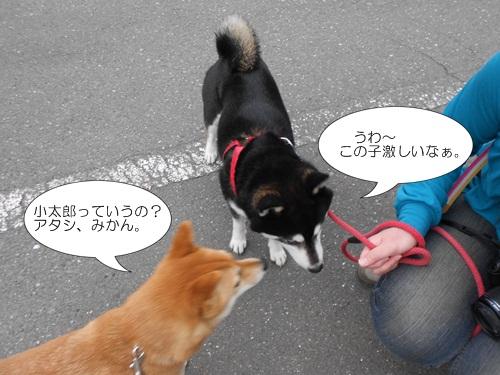 20120417小太郎6