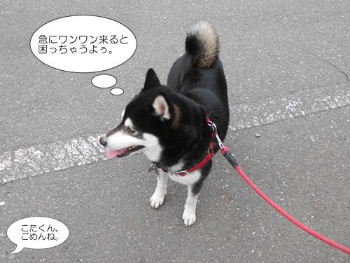 20120417小太郎7